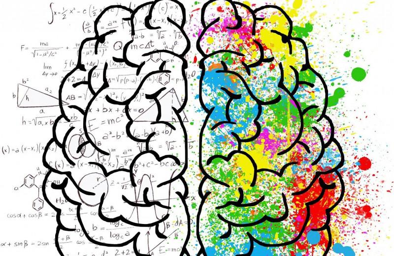 «Качай» мозг с молоду, или как непрерывное обучение влияет на наше серое вещество