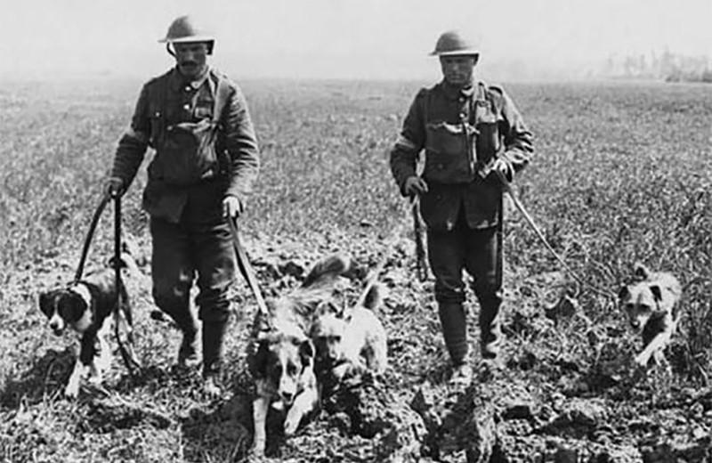 Заблудившаяся собака и еще 4 странные причины, из-за которых начинались войны