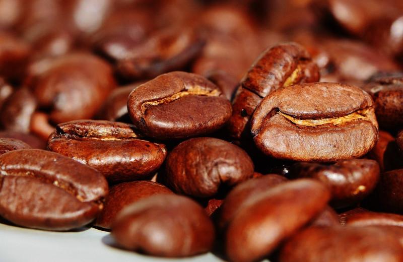 Борьба с эпидемией: какая инфекция губит кофе и что будет дальше
