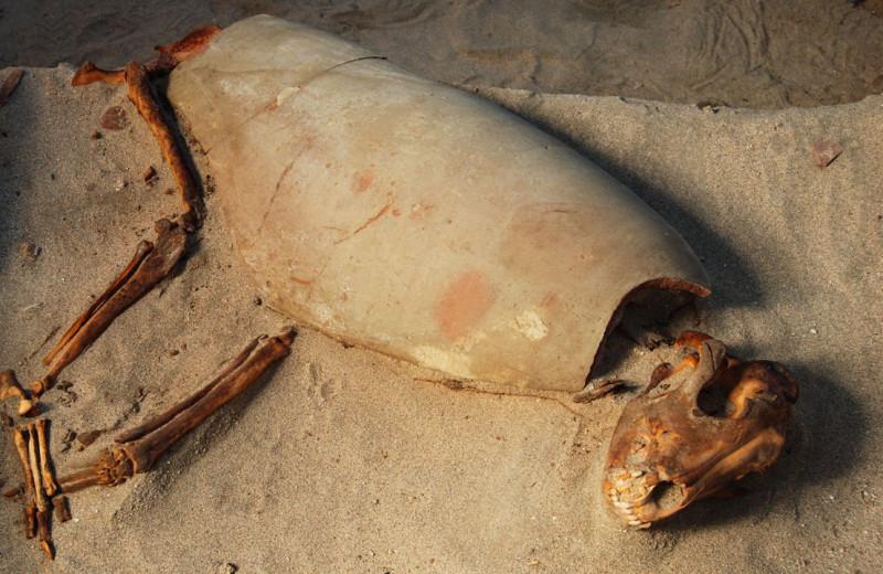 Зооархеологи нашли древнейшее кладбище домашних животных