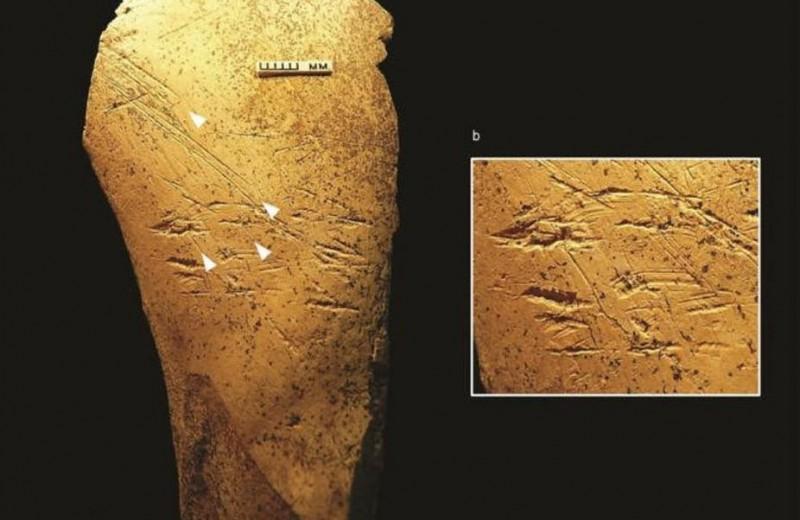 В Великобритании нашли орудия, которые использовал гейдельбергский человек