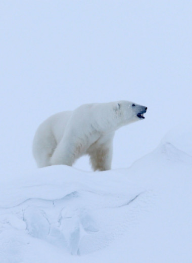 Темнокожий обитатель Арктики, жук-изумруд, птицы-фокусники: мастера оптических иллюзий в мире животных
