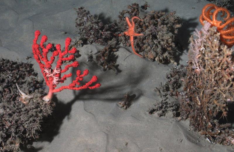 Крупнейший проект по изучению глубин Атлантики привел к открытию 12 новых видов