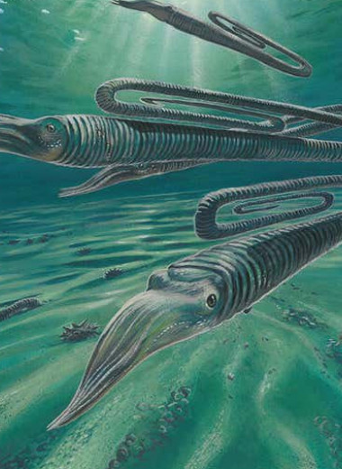 Древний причудливый моллюск оказался долгожителем: он мог доживать до 200 лет