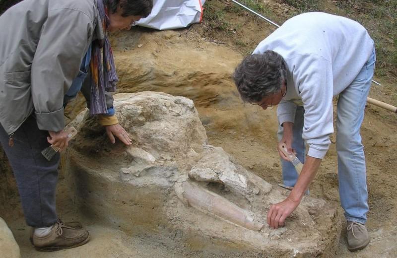 Французский фермер прятал череп пиренейского мастодонта