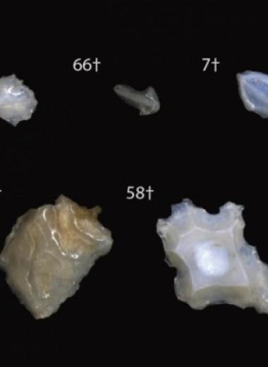 Палеонтологи обнаружили следы массового вымирания акул 19 миллионов лет назад