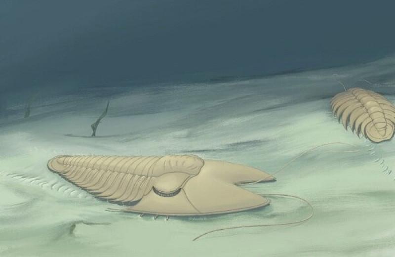 Палеонтологи обнаружили трилобитов с необычными головами