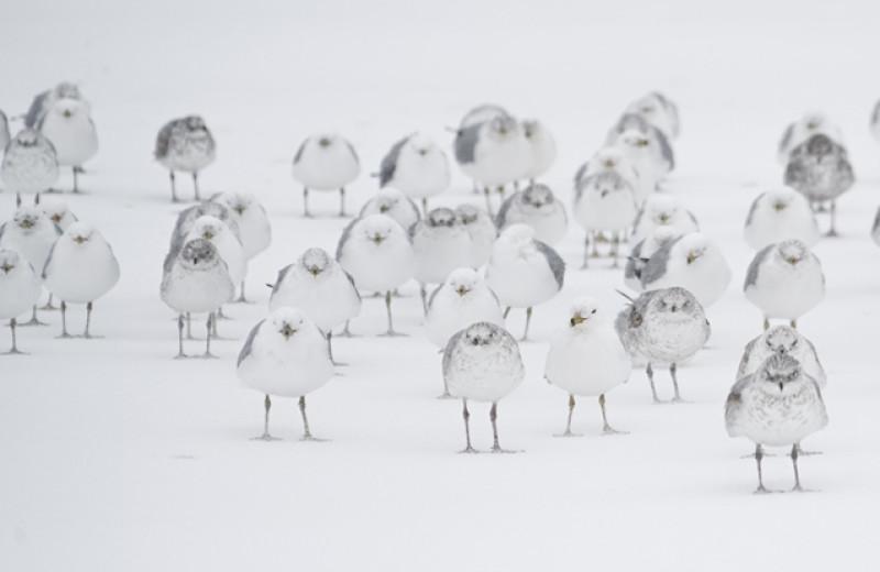 Как животные и растения переживают зиму. Отрывок из бестселлера TheNew York Times