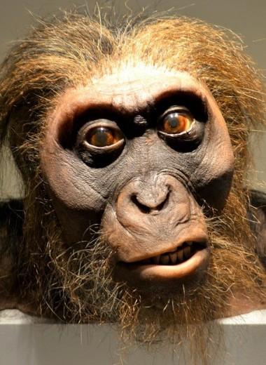 ABC (Испания): зловещая причина, по которой человек разумный выиграл у неандертальцев