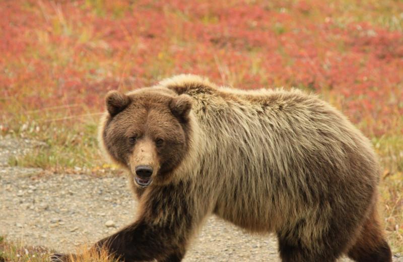 Пожилой мужчина чудом выжил после схватки с медведем