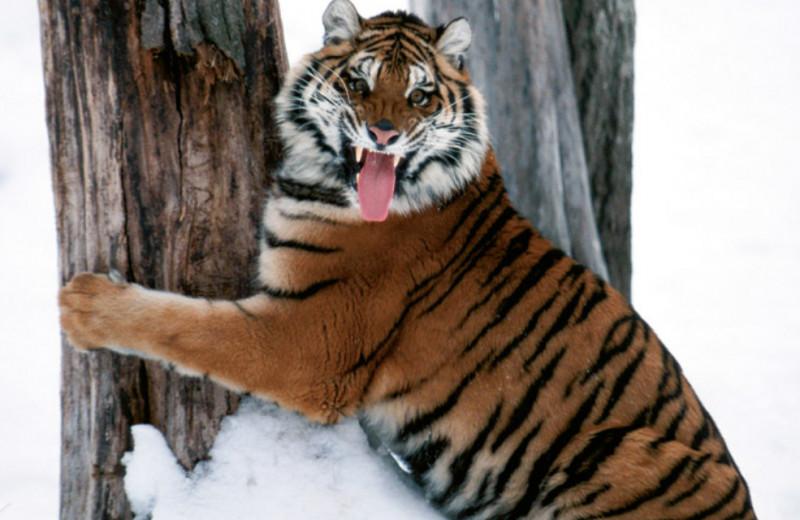 19 существ, которые могут тебя съесть