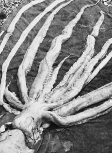 10 гигантских беспозвоночных