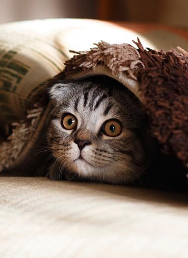 #пронауку: какую часть тела приятнее чесать и почему кошки жидкие