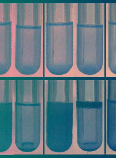 Замена нескольких кодонов на синонимичные защитила бактерии от вирусов