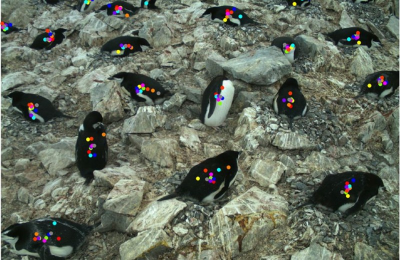 Как посчитать пингвинов не выходя из дома