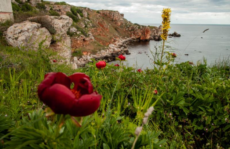 Дикий соперник розы: где в России найти одно из самых красивых лекарственных растений