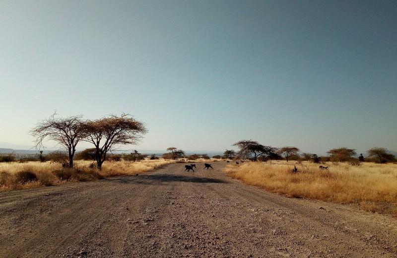 Одна вокруг света. Как разговаривать с африканскими полицейскими