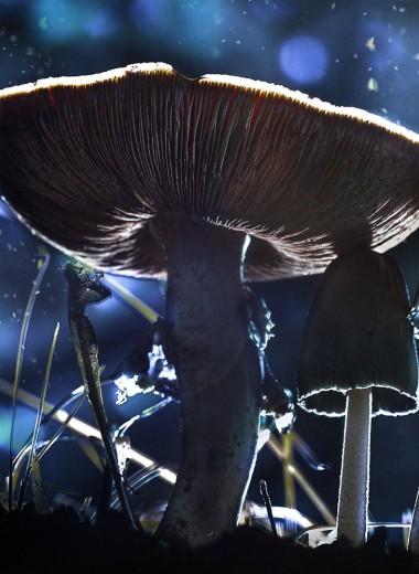 Чернобыльские грибы поглощают радиацию