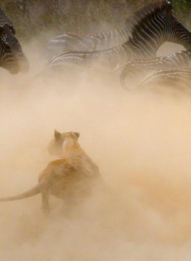 Переход через Мару: самое грандиозное шоу в живой природе