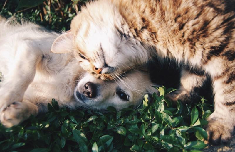 Руки прочь от котиков и собачек — на их месте можете оказаться вы