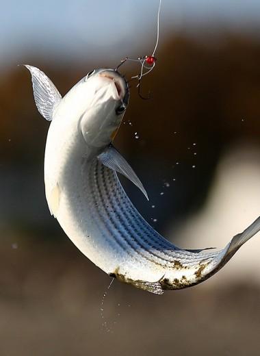 Отходы в доходы. Почему в России выбрасывают рыбу