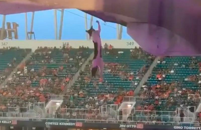 Футбольные фанаты спасают кота с помощью флага: видео