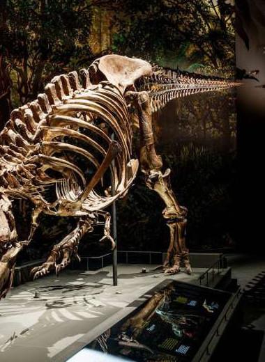 Ученые смоделировали походку тираннозавра: видео