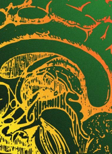 В шизофрении обвинили липидный обмен в мозолистом теле