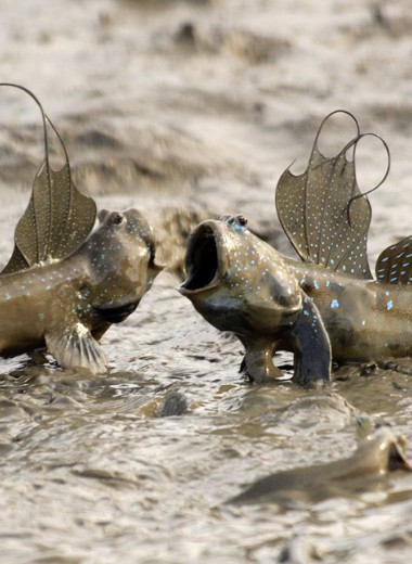 Эти непонятные животные: 13 неожиданных фотозоофактов