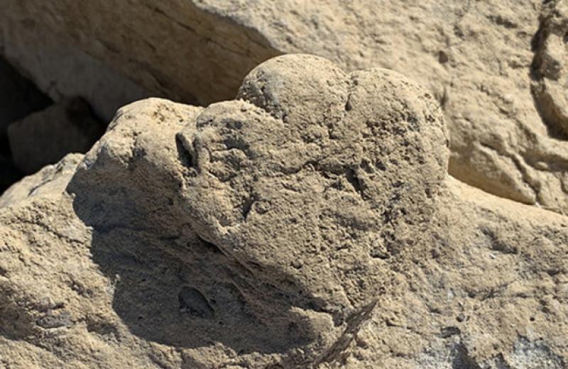 Палеонтологи впервые обнаружили следы молодого стегозавра