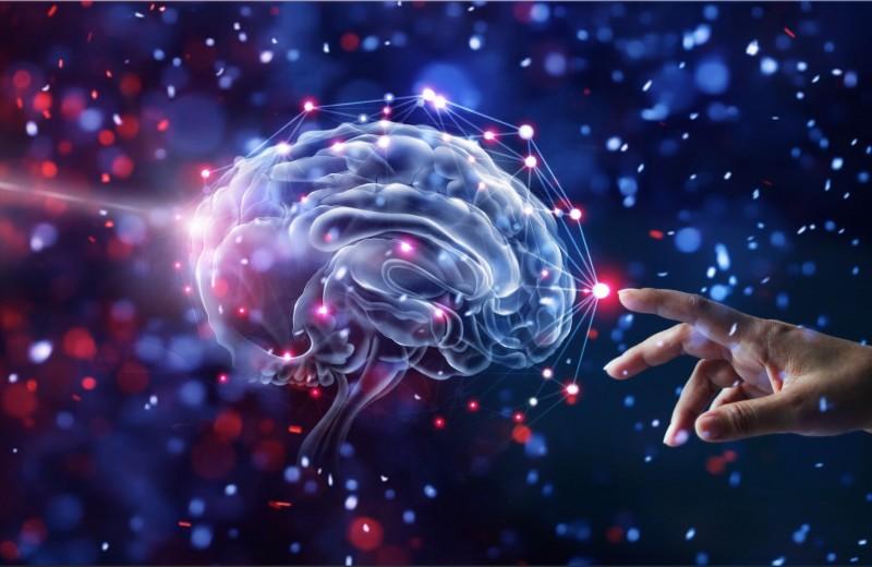 LiveScience (США): что мы узнали о мозге в 2019 году