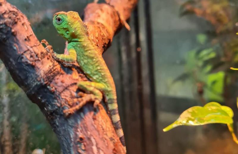 В Московском зоопарке на свет появились лесные драконы: фото