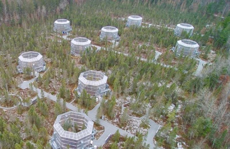 Болотоведы за четыре года нагрели болото и превратили его в источник парниковых газов