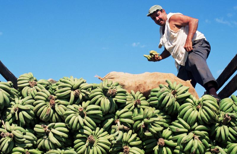 Как бразильский триатлонист подсадил американцев наснэки изнекондиционных бананов