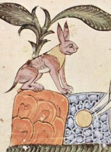 Зоологи объяснили маленькость зайцев и пищух