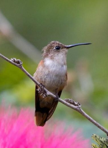 Первых поселенцев Багамских островов обвинили в гибели 38 популяций птиц