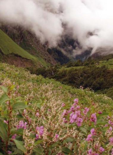 «Долина цветов» – парк с почти 500 видами цветов