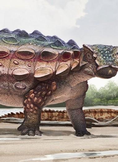 На плато Кайпаровиц открыт новый вид динозавров