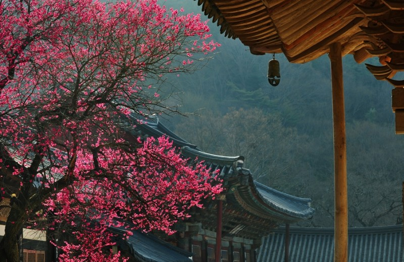 Уйти в монастырь: необычный способ познакомиться с корейской культурой