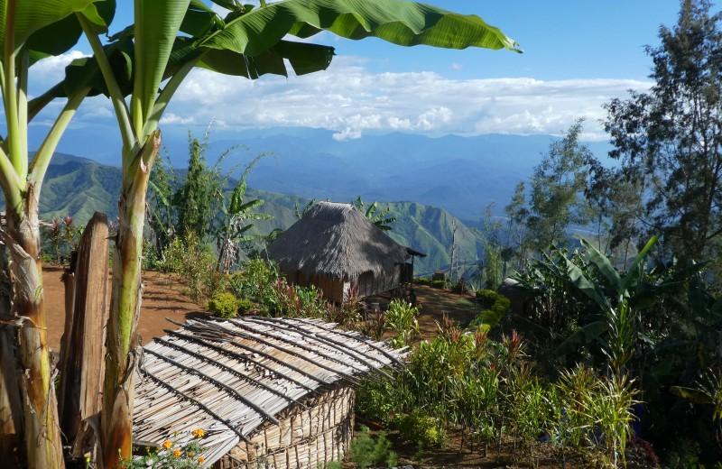 Жители Новой Гвинеи вступили в неолит за тысячу лет до прихода мигрантов из Азии