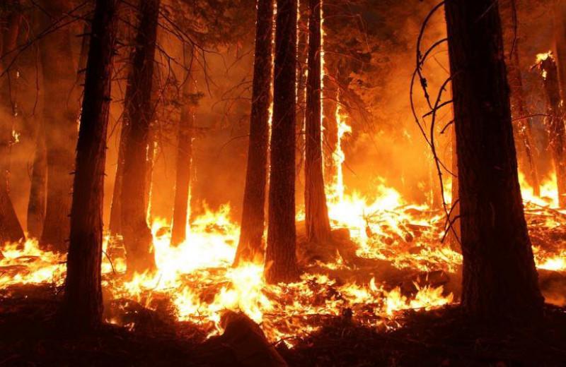 В Якутии сгорело более миллиона гектаров леса