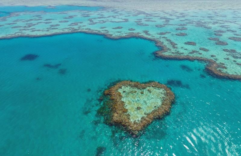 Ученые: Большой Барьерный риф не раз возрождался после массовой гибели кораллов
