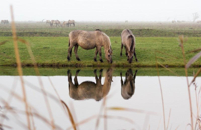 Узнают ли лошади себя в зеркале?