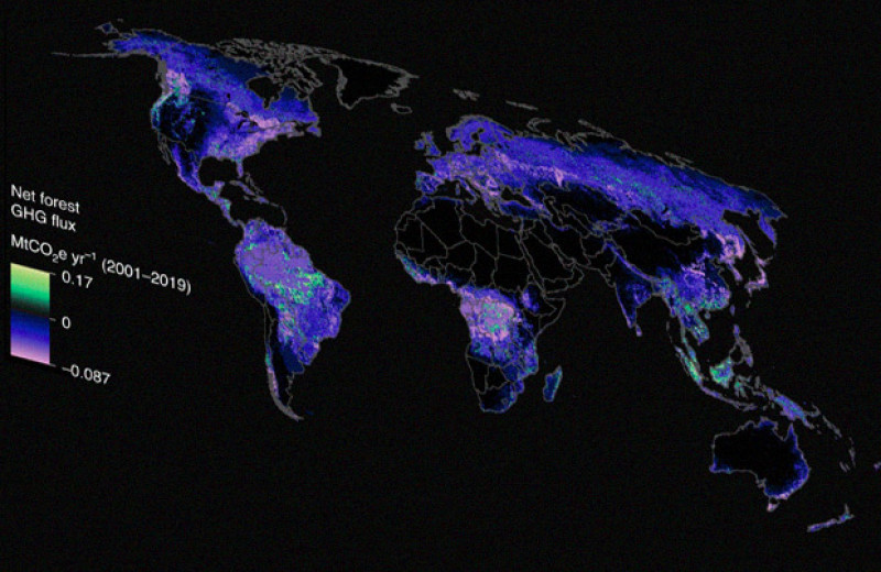 Ученые создали мировую карту углеродных потоков в лесах