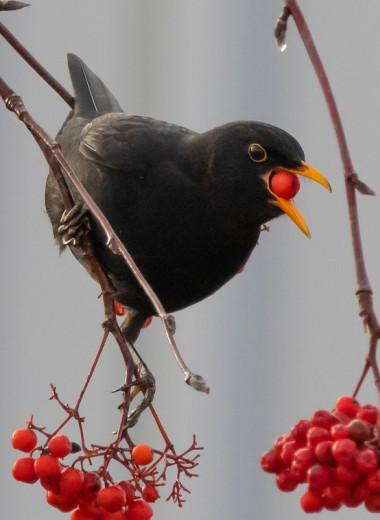 Унесенные птицей: как растения перемещаются на север