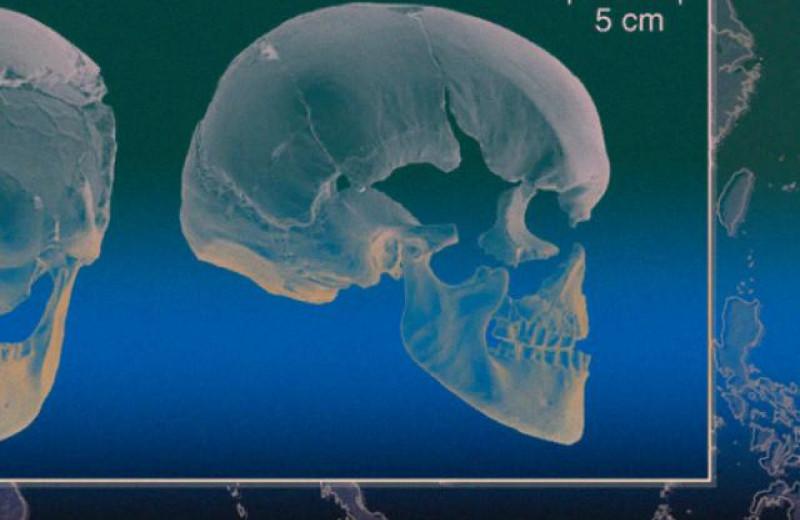 Расшифрован старейший геном современного человека
