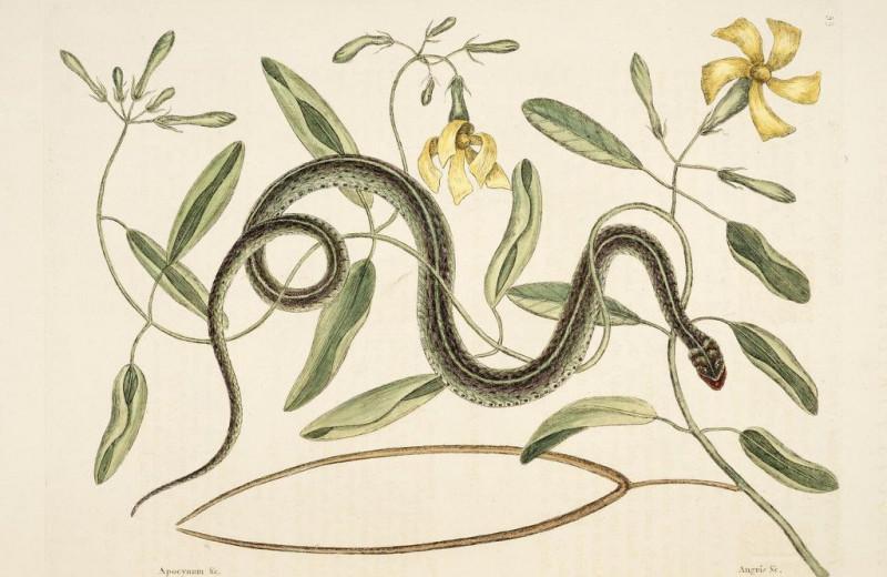 Спасительный инстинкт: люди подсознательно отличают ядовитых змей