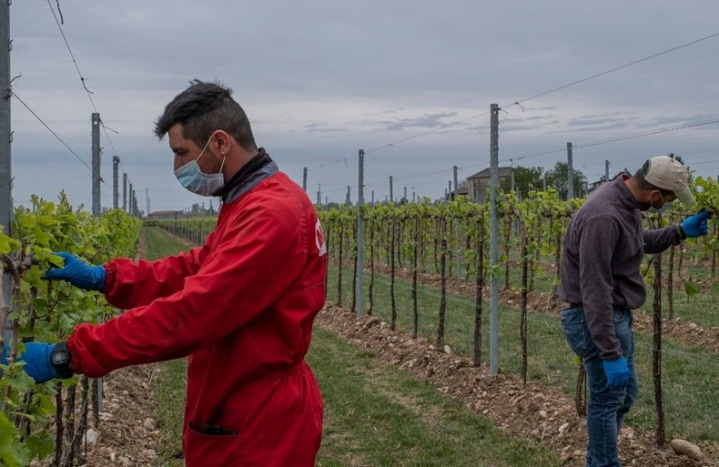 «Пить не перестанут». Как виноделы по всему миру ищут способы пережить кризис и пандемию