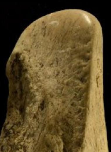 В Италии нашли самую большую коллекцию костяных орудий возрастом 400 тысяч лет