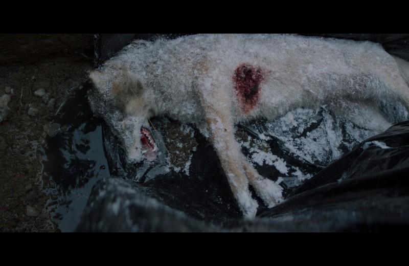 «Мысленный волк». Новый фильм Валерии Гай Германики как главная провокация «Кинотавра»